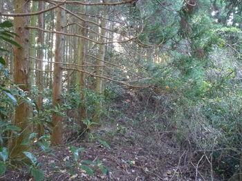 P1350255植林境尾根.JPG