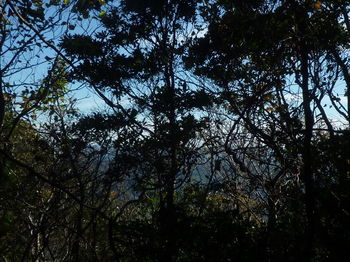 P1350260樹間越し(南東方向).JPG
