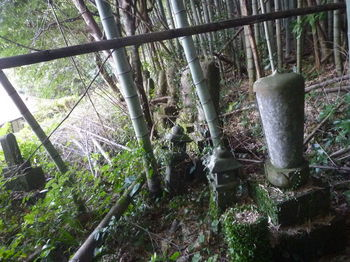 P1350291寺裏の古い墓地.JPG