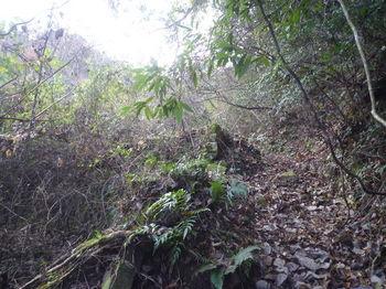P1350331耕作跡地沿い.JPG