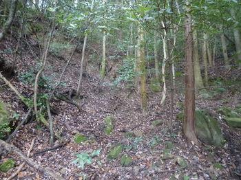 P1350333植林谷をジグザグに詰める.JPG
