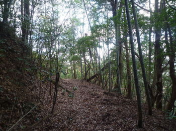 P1350339・幅広山道(右方向).JPG