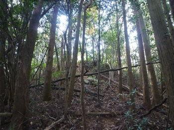 P1350347林道出合い手前斜面.JPG