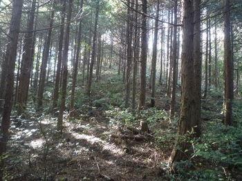 P1350371植林尾根へ出る(右方向).JPG