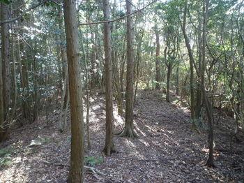 P1350381植林境.JPG
