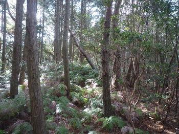 P1350395ヒノキ植林境.JPG