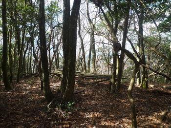 P1350418唐人山頂・木のベンチ.JPG