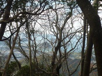 P1350419樹間越しに指月山.JPG