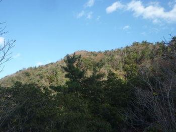 P1350439唐人山山頂方向.JPG