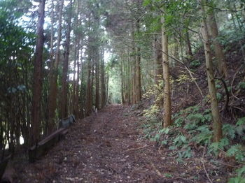 P1350472植林沿い.JPG