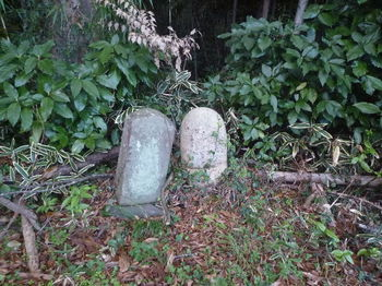 P1350489古墓.JPG