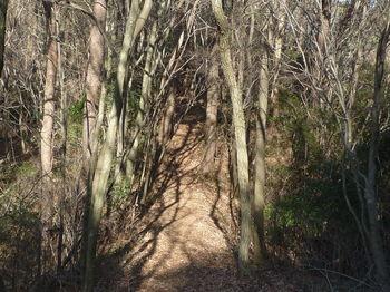 P1350838三角点山頂への登山道.JPG
