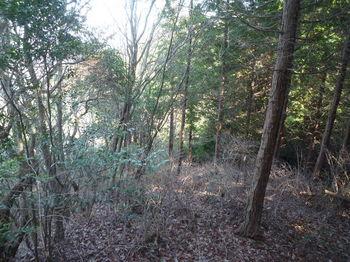 P1350854植林境尾根.JPG
