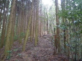 P1350919植林境の尾根道.JPG