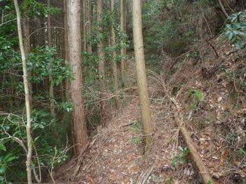 P1350931ヒノキ植林出合い.JPG