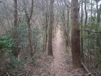 P1350986大将軍への登山道.JPG