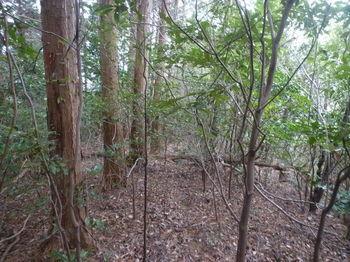 P1360056植林境.JPG