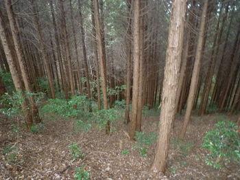 P1360067植林斜面.JPG