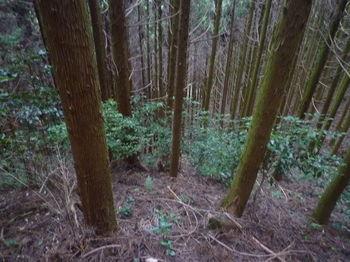 P1360069植林斜面・灌木交じり.JPG