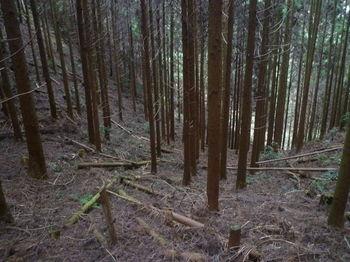 P1360071植林斜面.JPG