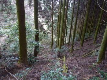 P1360073植林境の谷・踏み跡.JPG