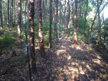 P1360086植林沿い・防獣ネット.JPG