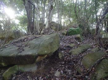 P1360103小岩が連なる尾根.JPG
