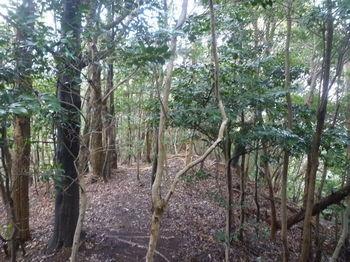 P1360114雑木疎林尾根.JPG