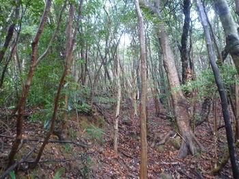 P1360122雑木疎林斜面.JPG