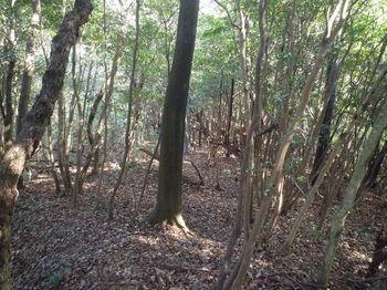 P1360127雑木疎林・市境尾根.JPG