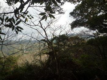 P1360142ピークからの樹間展望.JPG
