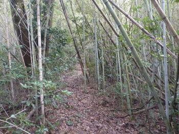 P1360167竹林沿い.JPG