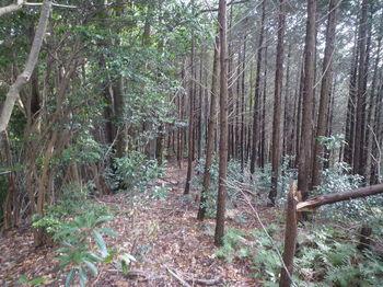 P1360195植林境.JPG