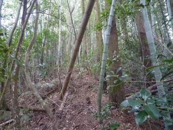 P1360197植林境・上り.JPG