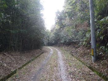 P1360231林道.JPG