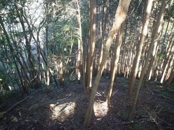 P1360293植林境・下り.JPG