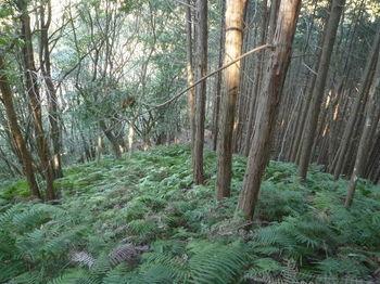 P1360294植林境・下り.JPG