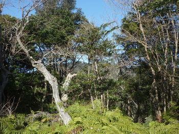 P1360304北西方向樹間に平原岳.JPG