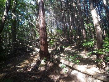 P1360312ヒノキ植林境・上り.JPG