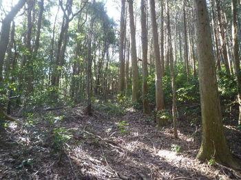 P1360365植林境・上り.JPG