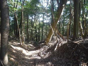 P1360382掘割鞍部(左方向).JPG