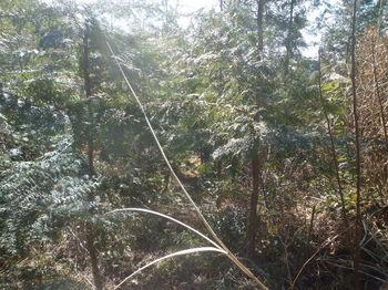 P1360391巡視路・植林帯.JPG