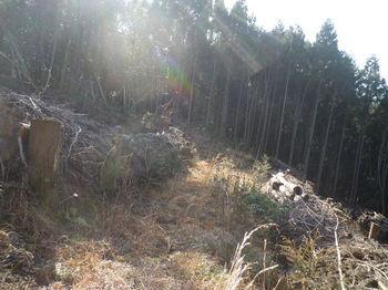 P1360393巡視路・伐採谷を横切る.JPG