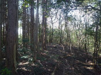 P1360409植林境(右へ).JPG