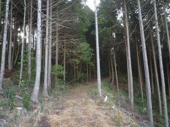 P1360443林道(巡視路).JPG