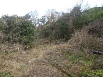 P1360456林道(左方向).JPG
