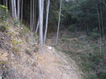 P1360473巡視路・谷沿い.JPG