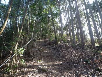 P1360477植林境尾根.JPG
