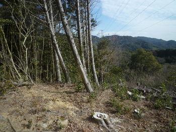 P1360497伐採地から雑木尾根道取り付き.JPG