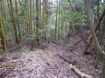 P1360511植林沿い.JPG